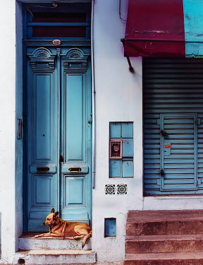 Elisabeth Ansley DOG LYING OUTSIDE SHOP WITH SHUTTERS Animals