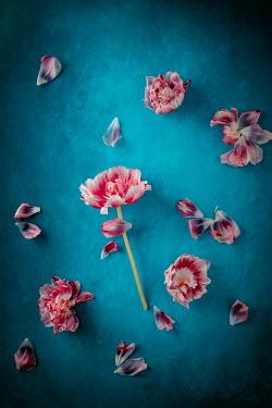 Magdalena Wasiczek PINK FLOWERS LYING IN PIECES Flowers