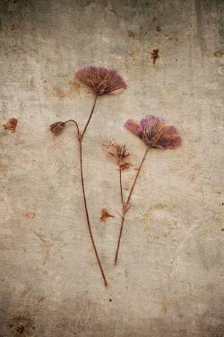 Liz Dalziel Dead flowers on concrete