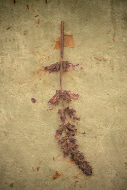 Liz Dalziel Dead flowers on concrete