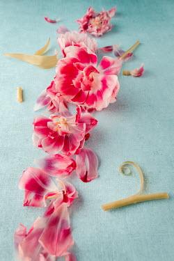 Magdalena Wasiczek Pink flowers