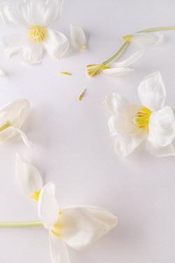Magdalena Wasiczek White flowers