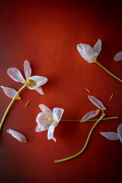 Magdalena Wasiczek White flowers on red