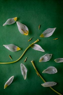 Magdalena Wasiczek Broken flower on green