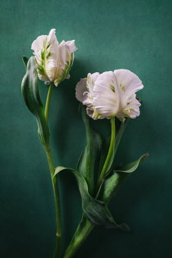 Magdalena Wasiczek White flowers on green
