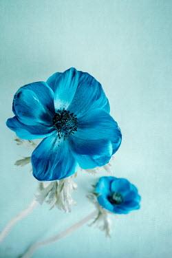 Magdalena Wasiczek Blue flowers