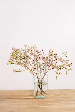 Magdalena Wasiczek Flowers in vase