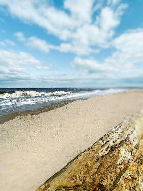 Lisa Bonowicz DRIFTWOOD ON SAND BEACH Seascapes/Beaches