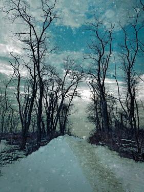 Lisa Bonowicz COASTAL PATHWAY WITH TREES AND SNOW Snow/ Ice