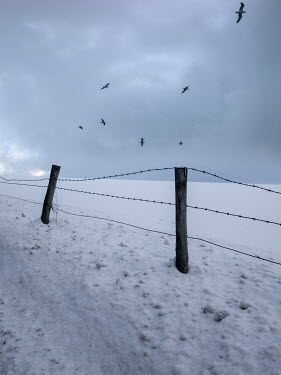 David Baker BARBED WIRE FENCE WITH SNOWY FIELD
