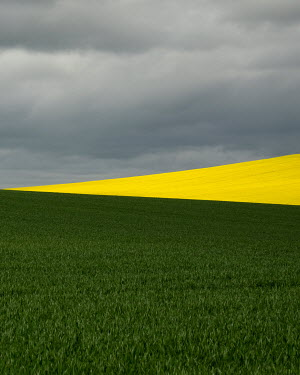 David Baker YELLOW AND GREEN FIELDS WITH STORMY SKY