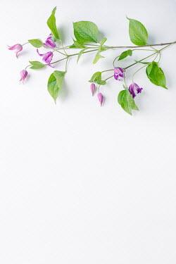 Magdalena Wasiczek PURPLE FLOWERS AND LEAVES