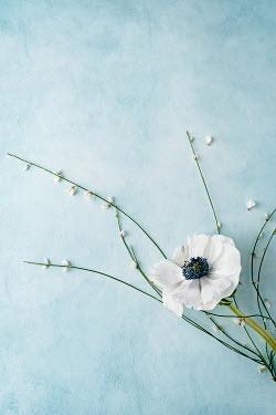 Magdalena Wasiczek DELICATE WHITE FLOWERS ON BLUE BACKGROUND