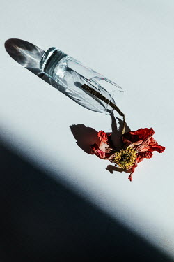 Matilda Delves DEAD FLOWER LYING IN BROKEN GLASS