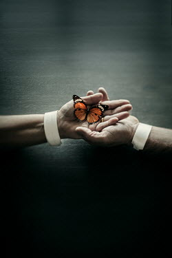 Lisa Bonowicz MALE AND FEMALE HANDS HOLDING BUTTERFLY 840
