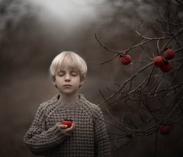 Sveta Butko LITTLE BLONDE BOY BY TREE WITH RED FRUIT