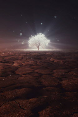 Andrei Cosma SHINING TREE IN BARREN LANDSCAPE