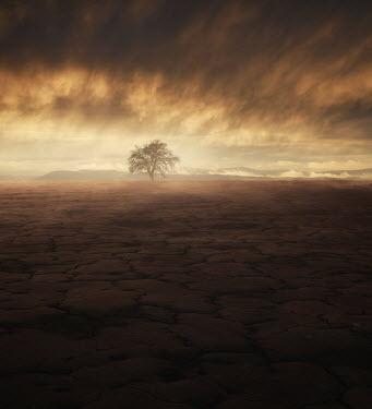 Andrei Cosma TREE IN STORMY BARREN LANDSCAPE