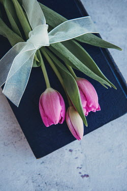 Isabelle Lafrance PINK TULIPS WRAPPED IN RIBBON ON BOOK