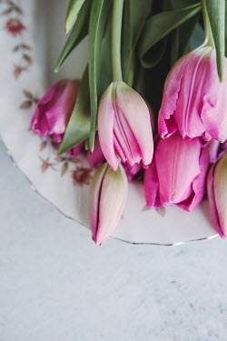 Isabelle Lafrance PINK TULIPS LYING ON FLORAL PLATE