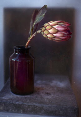 Andreeva Svoboda ARTICHOKE BUD IN GLASS BOTTLE