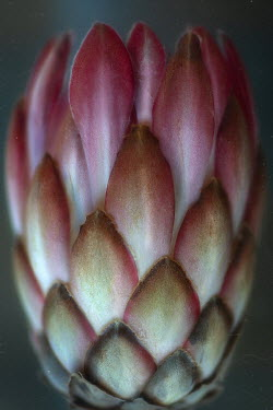 Andreeva Svoboda CLOSE UP OF ARTICHOKE
