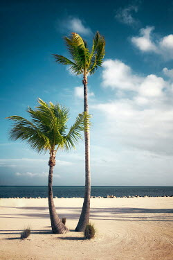 Evelina Kremsdorf PALM TREES ON EMPTY SANDY BEACH