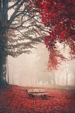 Evelina Kremsdorf BENCH UNDER AUTUMN TREE WITH LEAVES