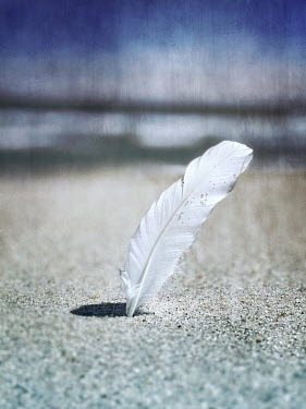 Lisa Bonowicz WHITE FEATHER IN SANDY BEACH