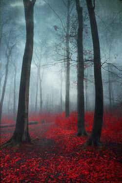 Dirk Wustenhagen FOGGY FOREST WITH AUTUMN LEAVES
