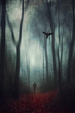 Dirk Wustenhagen SILHOUETTED MAN STANDING IN DARK FOREST