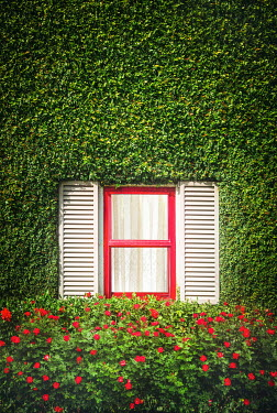 Evelina Kremsdorf WINDOW IN HOUSE COVERED WITH FOLIAGE