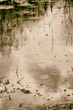Tim Robinson Ripples in pond