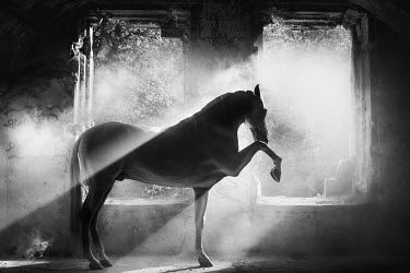 Anna Sychowicz Horse in sunlight by windows of abandoned building