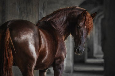Anna Sychowicz Brown horse in abandoned building
