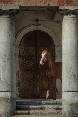Anna Sychowicz Brown horse by door of abandoned building