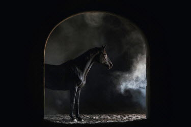 Anna Sychowicz Black horse in tunnel