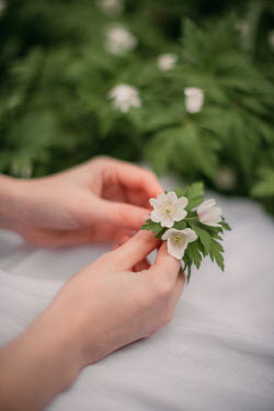 Rebecca Stice FEMALE HANDS HOLDING WHITE FLOWERS