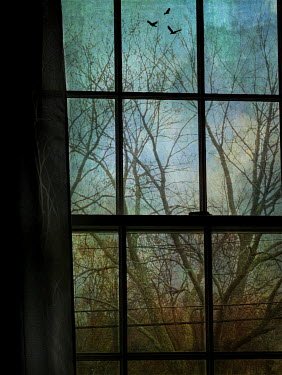 Lisa Bonowicz WINDOW WITH TREE IN WINTER