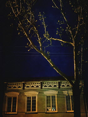 Lisa Bonowicz EXTERIOR OF BUILDING WITH TREE AT NIGHT