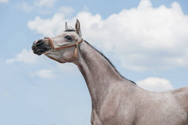 Anna Sychowicz HEAD AND NECK OF HORSE WITH BLUE SKY
