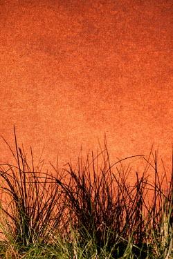 Kerstin Marinov GRASS WITH ORANGE SKY