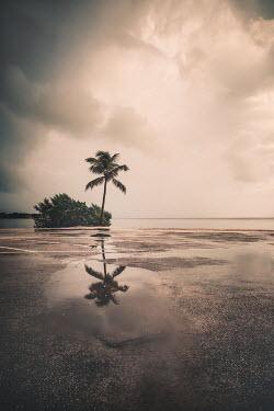 Evelina Kremsdorf CARPARK BY BEACH WITH PALM TREE IN RAIN
