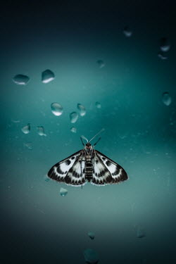 Magdalena Russocka patterned butterfly and water drops on glass