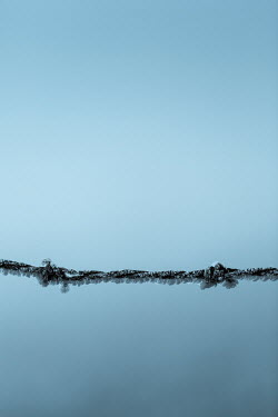 Magdalena Russocka frosted barbed wire