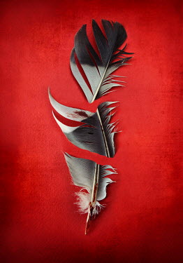 Lyn Randle BROKEN FEATHER WITH BLOOD