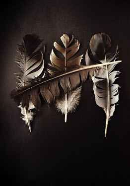 Lyn Randle FEATHER LYING ACROSS THREE FEATHERS