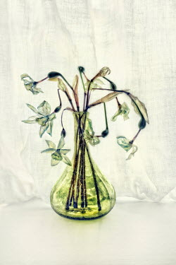 Paul Knight WILTED FLOWERS IN GLASS VASE