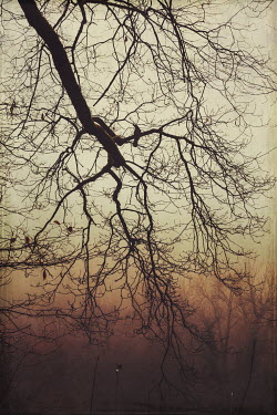 Dirk Wustenhagen BRANCHES OF WINTRY TREES AT DUSK
