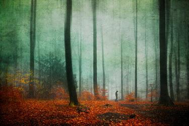 Dirk Wustenhagen SILHOUETTED MAN WALKING IN AUTUMN FOREST